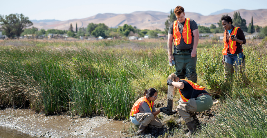 4 students gather samples in the wetlands