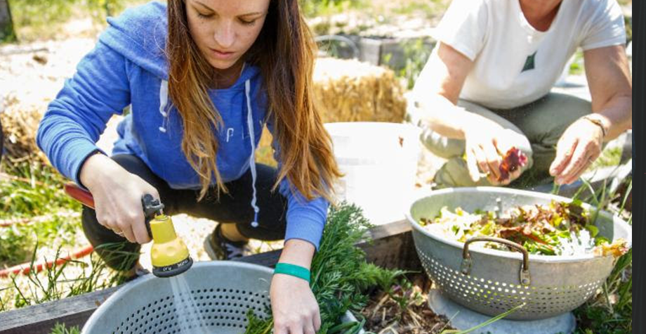 Students wash vegetables from our campus garden